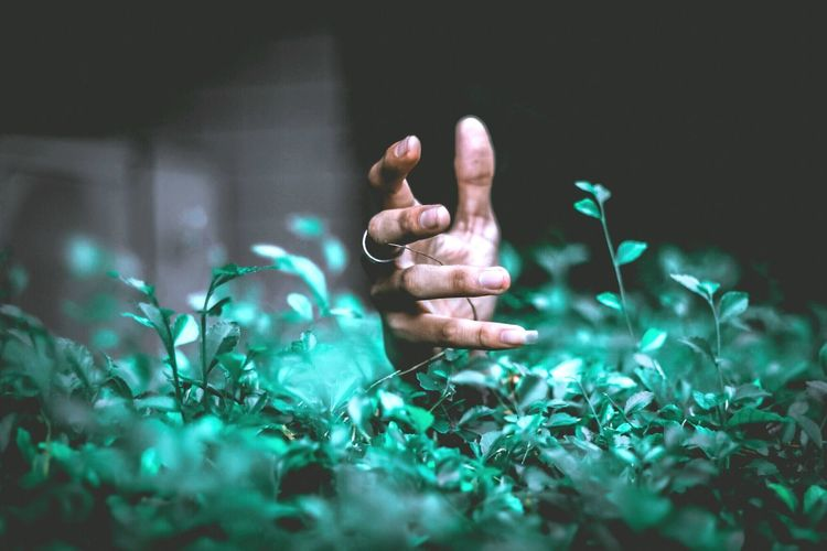 Close-up of woman hand amidst plants