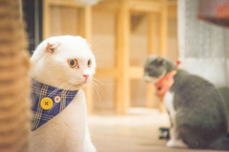 Awkward Cat