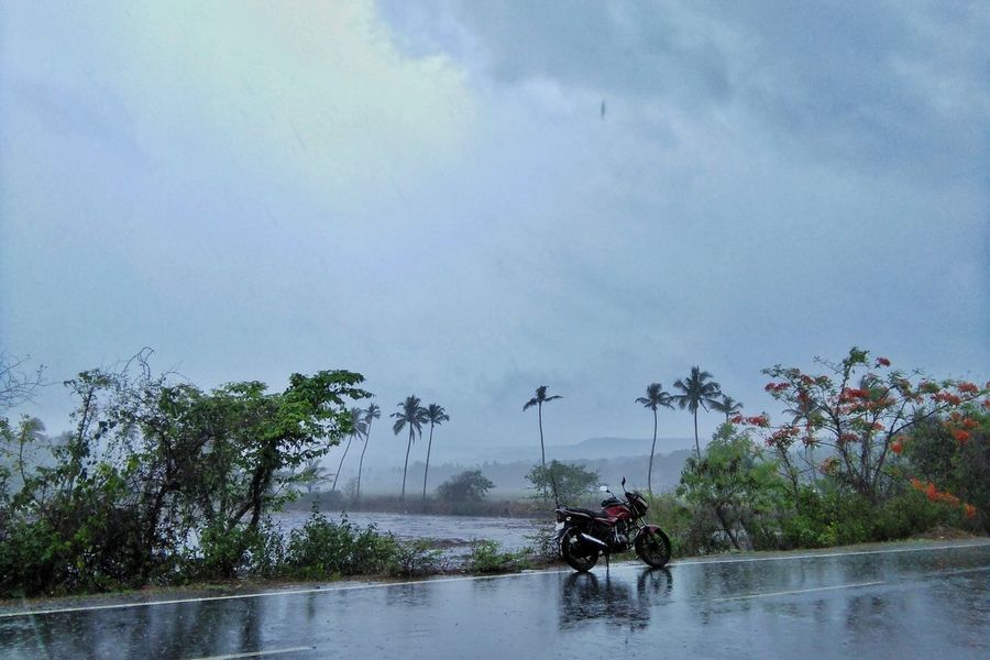 Tree Riding Outdoors Sky Nature Goa Indiapictures Lifestyles The Great Outdoors - 2017 EyeEm Awards Green Color Tree The Street Photographer - 2017 EyeEm Awards Visual Feast Vacations Village Photography Ruralphotography India_clicks Goadiaries Palm Trees Landscape_Collection Raining Raining Season EyeEm Best Shots EyeEmNewHere EyeEm Best Shots - Nature