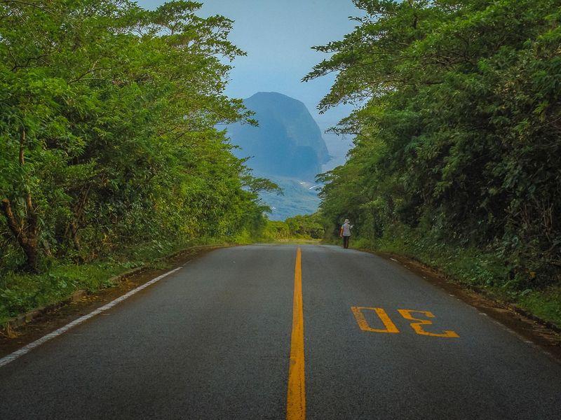 Road Marking Road The Way Forward Landscape Tree Nature Green Color Vulcano Coastline Walking Hachijojima Hachijo-island Japan