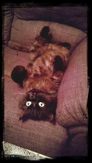 Say waaaaaa'??? Cat My Cat