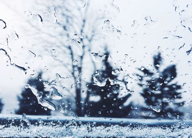 Drop Nature Water Beauty In Nature Outdoors Day Cold Temperature Tree Christmas Tree Christmastime Winter Snow Norway