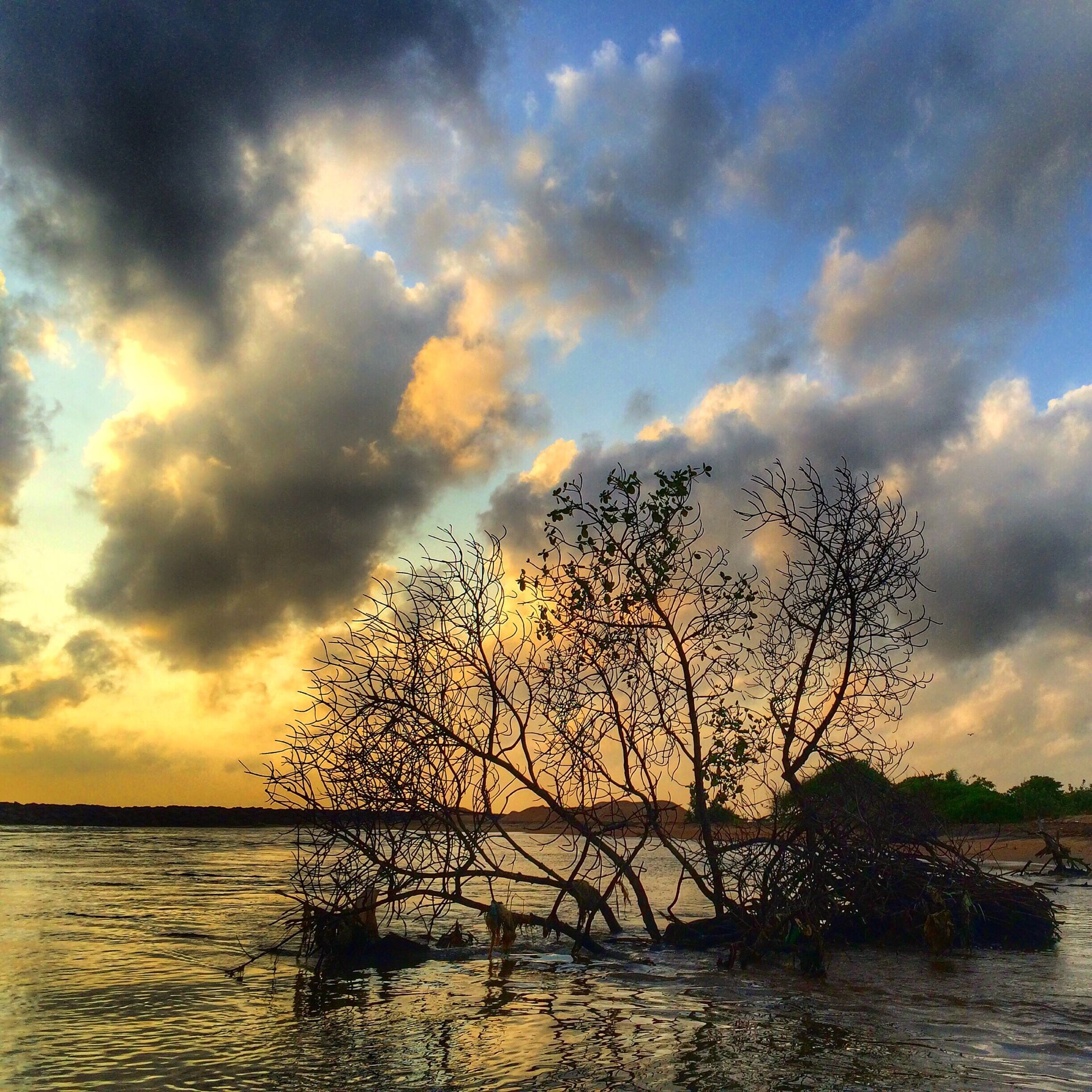 sky, sunset, water, tranquil scene, cloud - sky, sea, scenics, tranquility, beauty in nature, horizon over water, nature, cloudy, cloud, silhouette, tree, idyllic, growth, branch, no people, outdoors