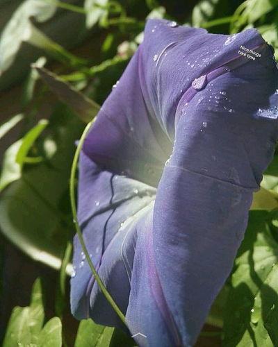 Patience Flower