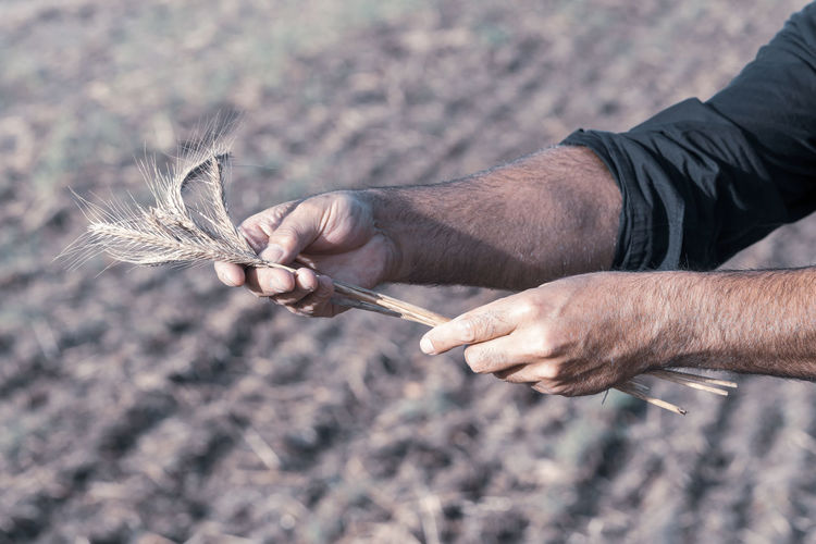 Close-up of man holding hand on field