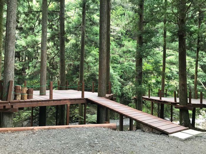 森に浮かぶキャンプ場 Mountain Forest Tree