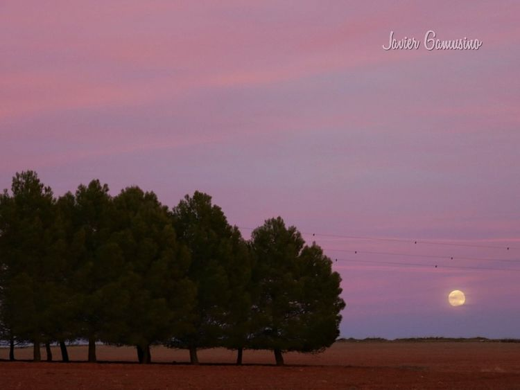 moon Moon Sunset Tree No People Beauty In Nature Night Sky Outdoors Tranquility Astronomy Landscape Scenics Nature