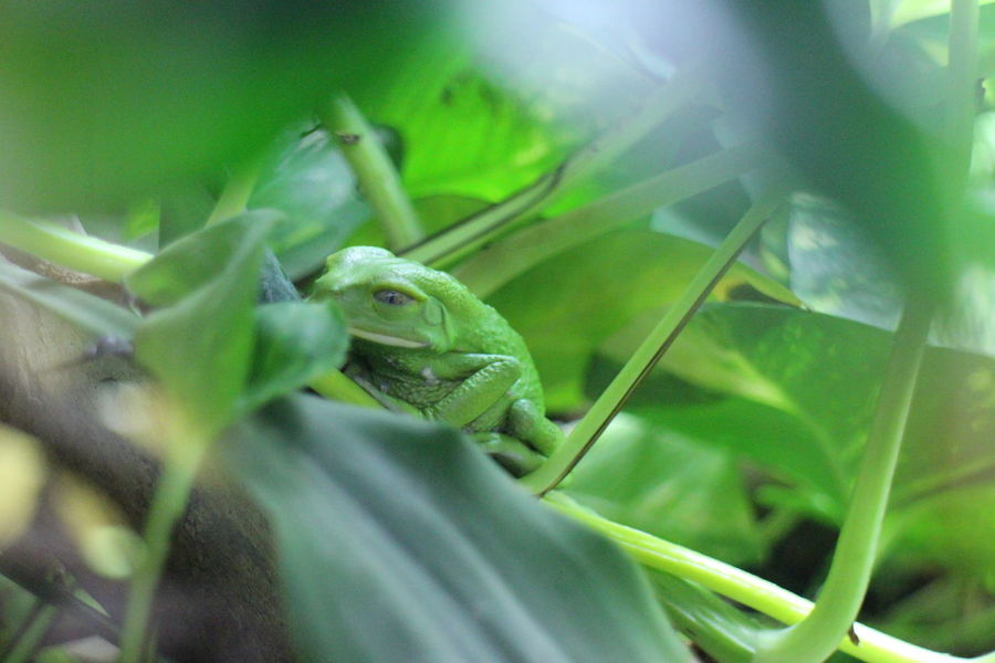 Wildlife Park Wildlife & Nature Animal Themes Animal Animals In The Wild Animal Photography Animal Wildlife Nature Photography Animals In Captivity Animals Photography Nature_collection Zoo Animals Planets Green Animals Amphibian Frogs Frog Animal_collection Nature
