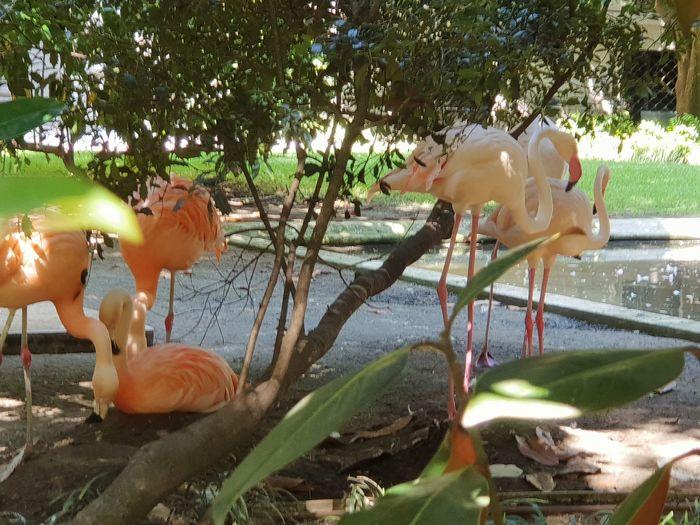Pink Pink Birds Petslife Birdwatching Birds Birds Of EyeEm  Birds🐦⛅ Birds_collection Tree Water Flamingo