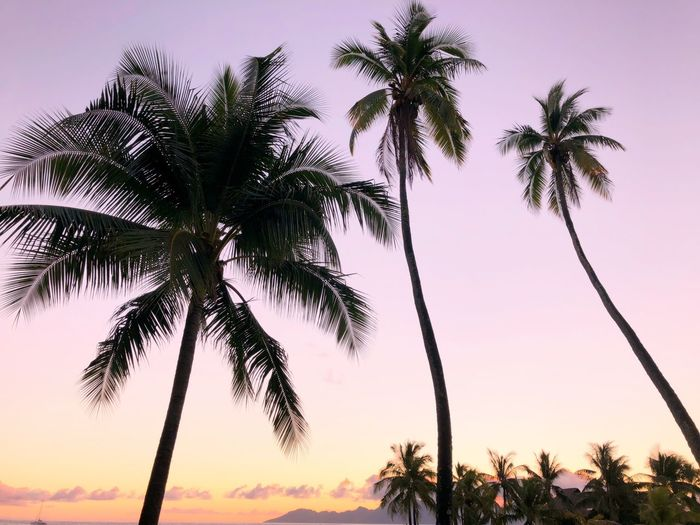 Palm tree sunset Plant Tree Sky Growth Low Angle View Beauty In Nature Tropical Climate Palm Tree Tranquility Nature Sunset No People Silhouette Outdoors Scenics - Nature Coconut Palm Tree Tranquil Scene Clear Sky