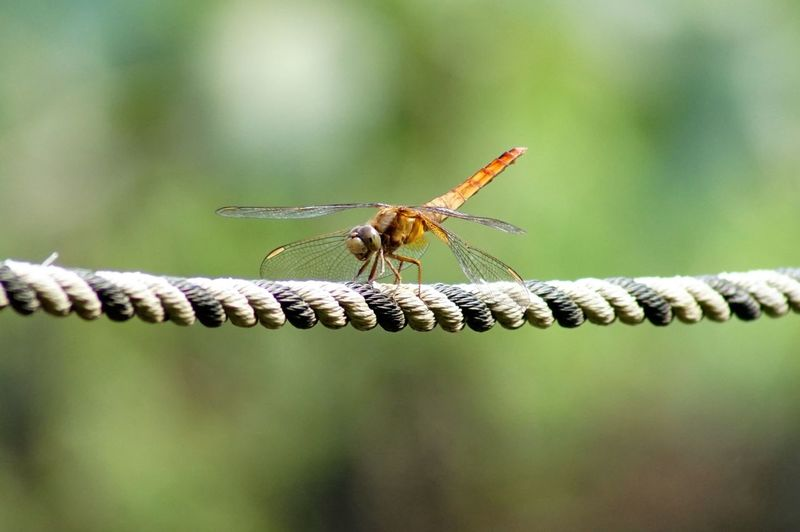 Dragonfly perching on a rope