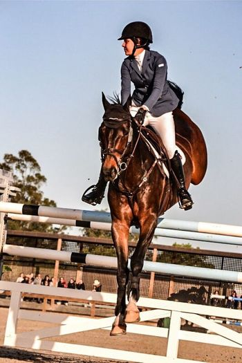 Horse Horse Riding