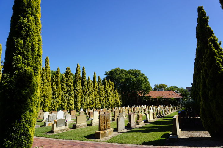 Panoramic view of trees against clear blue sky