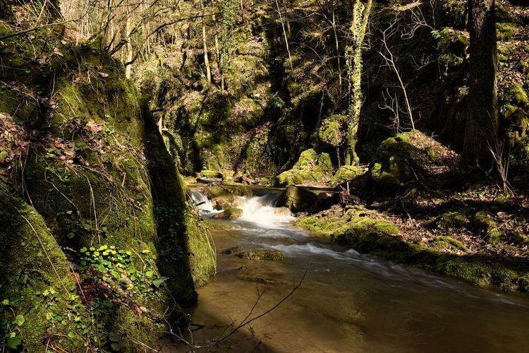 Flowing Water Forest Growth Nature Power In Nature Stream - Flowing Water Tree Water WoodLand