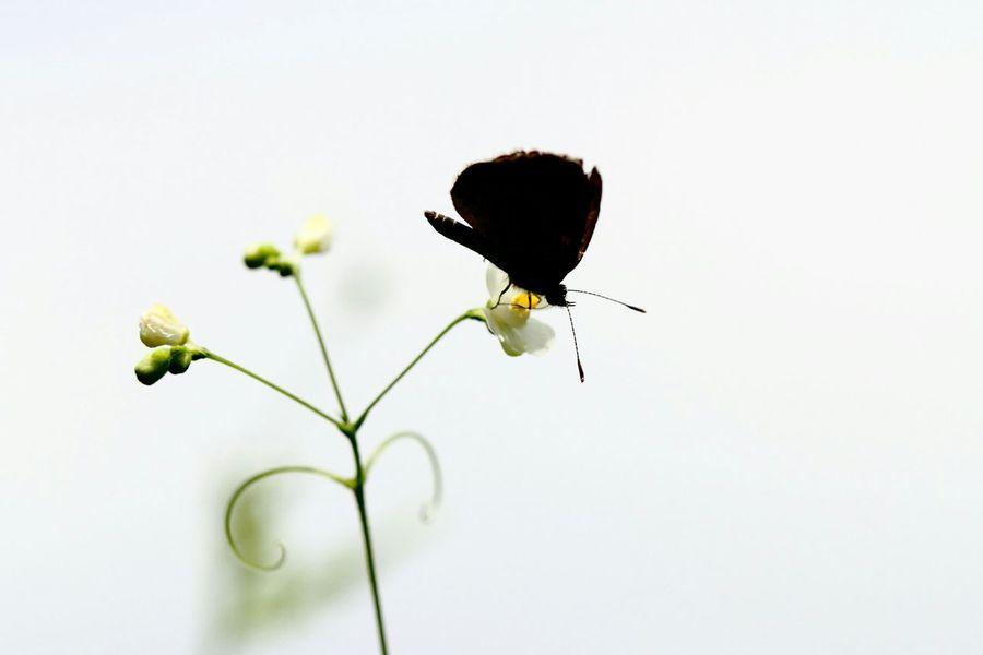 Flowerporn Butterfly Shadow Naturelovers EyeEm Best Shots