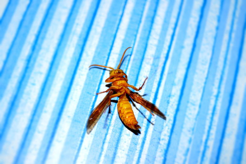 Close-up of dead insect on blue table