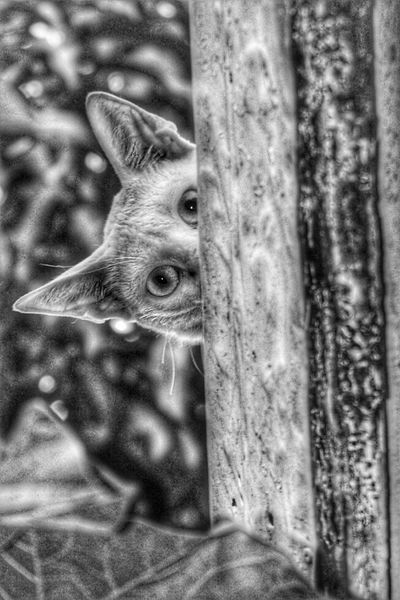 Cat peeping Kitten Cat One Animal Animal Animal Themes Mammal Close-up No People Vertebrate Animal Body Part Day Animal Head  Focus On Foreground Eye Looking At Camera Portrait Selective Focus Outdoors Nature Domestic Animals