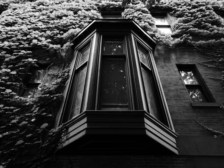 NYC NYC Photography NYC Street Architecture Black And White Photography Building Exterior Built Structure Day Gramercy Gramercy Park Low Angle View Nature No People Nyc Architecture Outdoors Steps Tree Window