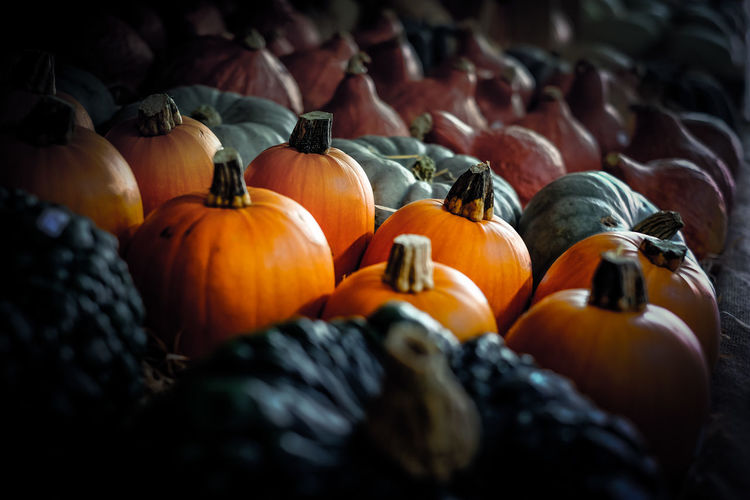 Abundance Arrangement Colors Colors Of Autumn Food Food And Drink Freshness Pumpkins Selective Focus Vegetable