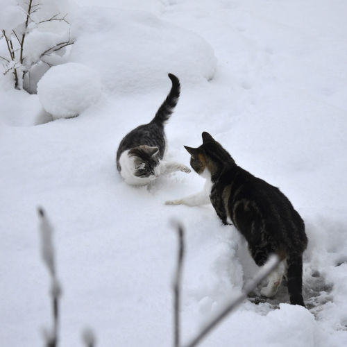 High angle view of cats on snow