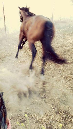 Horse Cowboy California Santarosa Wine Country