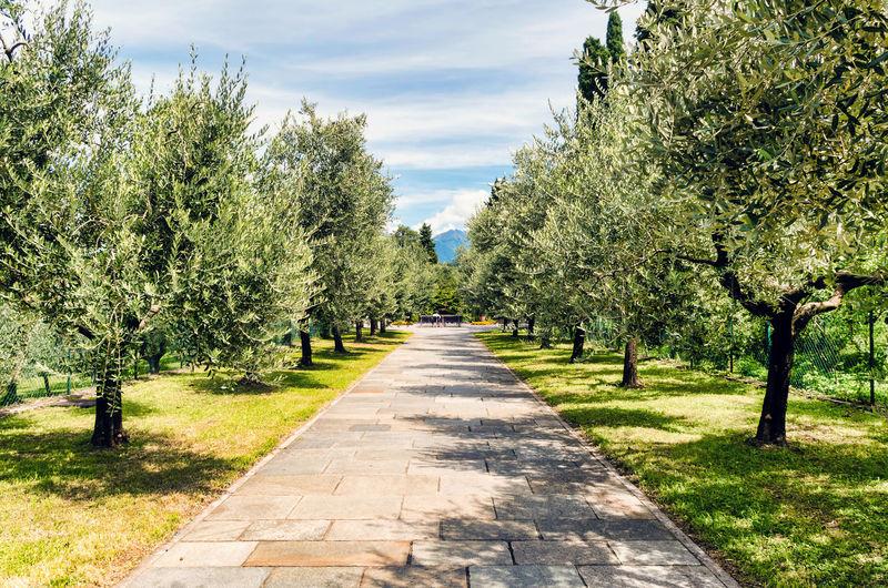 Footpath in park against sky