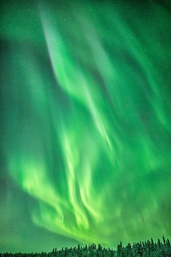 Sky full of flames Green Color Beauty In Nature Scenics - Nature Tranquility Tranquil Scene Sky No People Dramatic Sky Idyllic Nature Night Low Angle View Star - Space Astronomy Northern Lights Aurora Borealis Landscape Travel Explore Nature Photography Phtography Flame Arctic Scenics Freshness