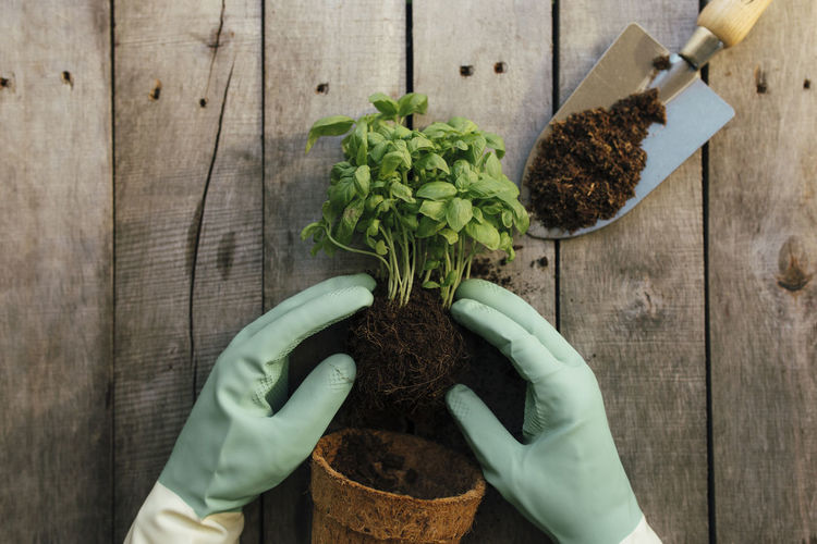 Gardening hobby concept. hands holding eco pot with green plant, shovel on wooden background