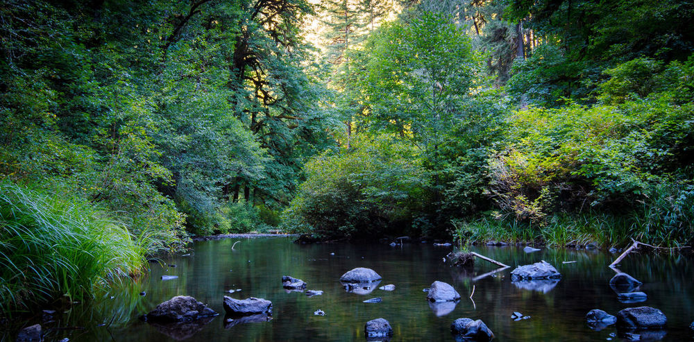 Cascadian Creek Beauty In Nature Botanical Garden Day Floating On Water Forest Freshness Green Color Growth Lush - Description Lush Foliage Nature No People Outdoors Plant Reflection Scenics Swimming Swimming Pool Tranquil Scene Tranquility Travel Destinations Tree Vacations Water Water Slide