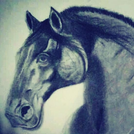 Horse Charcoal Drawing. Horse