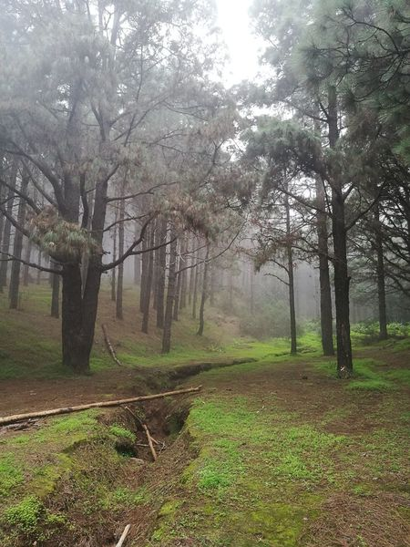Las Raíces Tenerife Tree Nature Beauty In Nature Tranquility Tranquil Scene No People