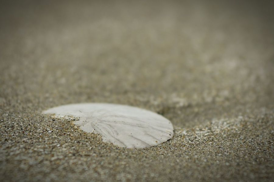 Sand Dollar Cayucos Beach Beach Photography Ocean Nature EyeEm Nature Lover Sand Coastline 16-80 Zeiss Natures Diversities