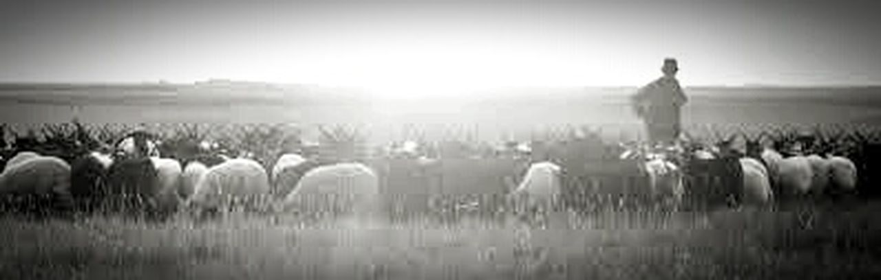 Sunset Beauty In Nature People Outdoors Silhouette Large Group Of People Nature Adult Landscape Rural Scene Lifestyles Sky Black & White Photography Blackandwhite Black & White Blackandwhitephotography Blac&white  Blackwhite Beauty In Nature Blac&white  Nature Photography Puszta Animal Themes