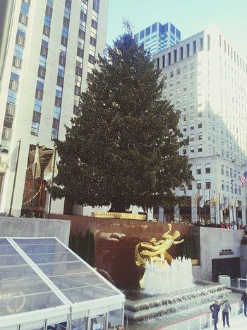 NYC Christmas Tree Rockefellerplaza