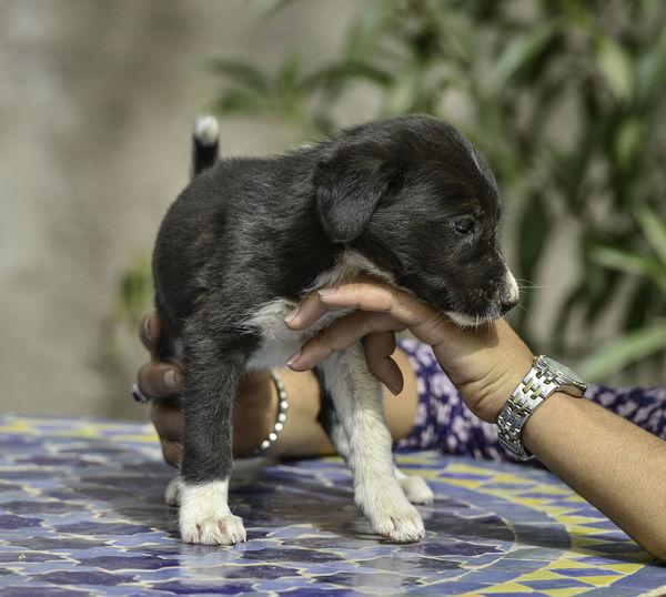 orphan puppy