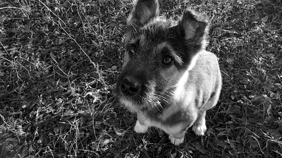 Pets And Animals My Dog Black And White Russia My cutest dog:))