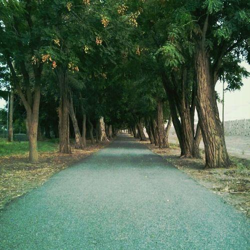 Taking an evening stroll. Walking Around TreePorn Walking Nature