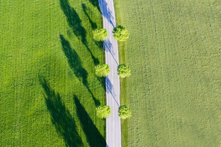 The Great Outdoors - 2017 EyeEm Awards Green Color Day Grass Sunlight Outdoors Shadow Nature Lifestyles Ladyphotographerofthemonth Aerial Shot Aerial View Rural Scene Country Road Countryside Symmetry Symmetrical Shadows Shadows & Lights Tranquility Summertime Tree Trees Alley The Way Forward