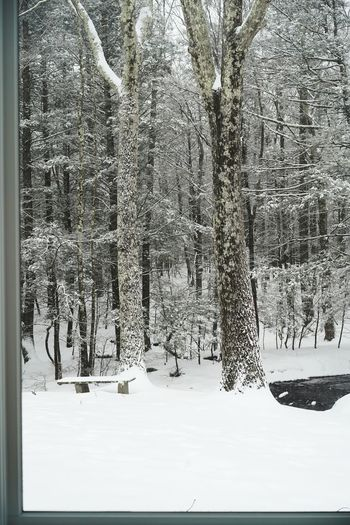 Saugerties, Upstate New York Bench Stream Hudson Valley Window Frame Window View Tree Snow Winter Cold Temperature Pinaceae Deep Snow Woods