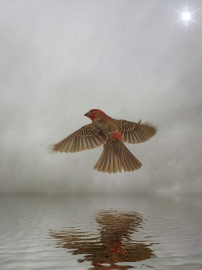 Water Animal Animal Themes Vertebrate Nature Bird Flying Animal Wildlife Beauty In Nature One Animal Animals In The Wild Spread Wings Outdoors Mid-air Reflection Fog
