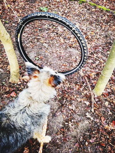 Lucky and tyre EyeEm Natural Playground Dog Playing Natural Playground Pets Dog High Angle View