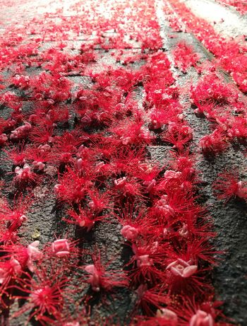 Flower Red Backgrounds Full Frame Close-up Carpet Red Color The Street Photographer - 2018 EyeEm Awards