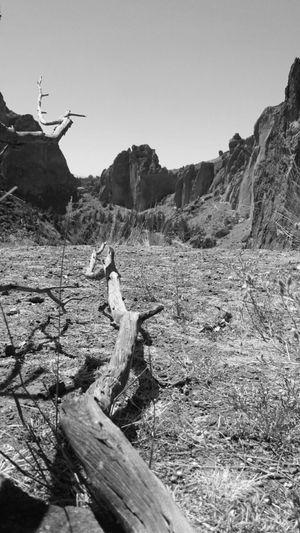 Drift wood on mountain against clear sky