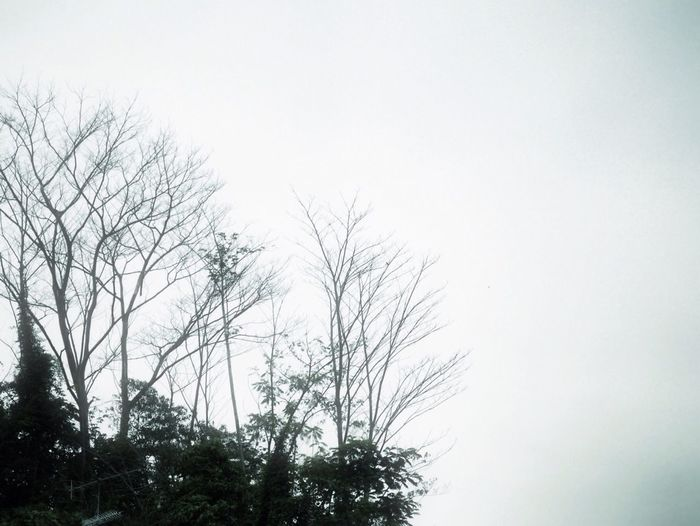 Low angle view of bare trees against clear sky