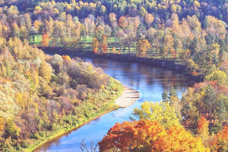 River Landscape_Collection Landscape_photography Autumn Autumn Leaves Autumn colors Yellow Landscape Water Tree Lake Sky Pine Woodland Evergreen Tree Mountain Range Woods Blooming