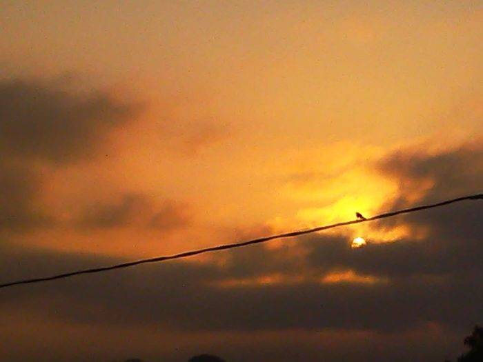 Good Morning friends in the World🌎🌍🌏🌹 Sunrise Bird Vapor Trail Silhouette Orange Color Cloud - Sky Telephone Line
