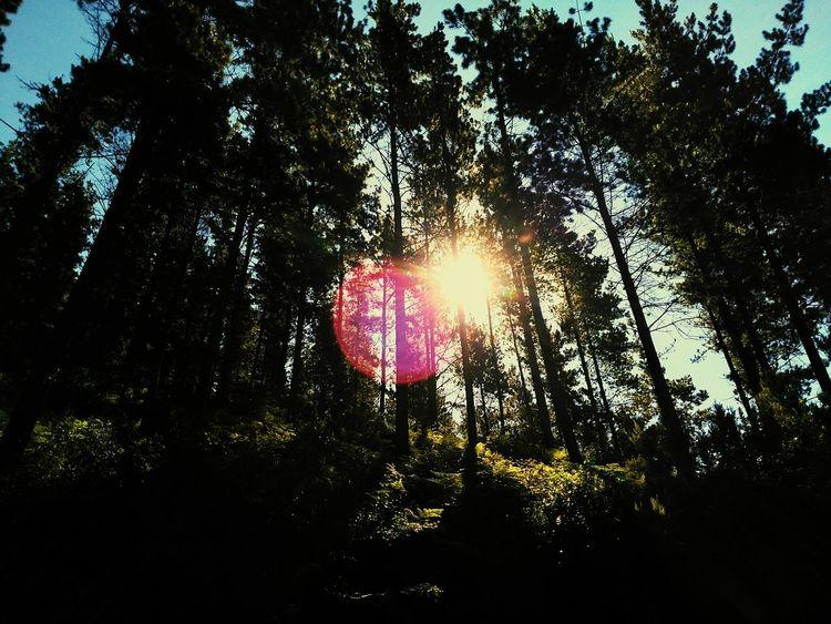 SPAIN España Pagasarri Bilbao Nature Naturaleza Enjoying Life Relaxing Bosque Forest árbol Tree Hill Monte Luz Arboles Trees Contrasts Contraluz Oscuro Dark Forest Sol Sunlight Soleil