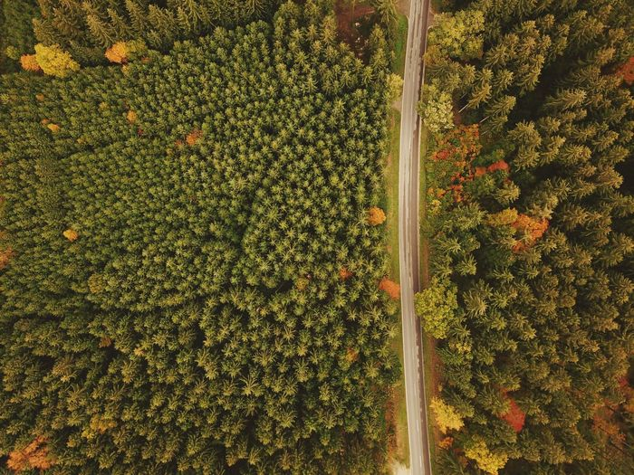 Top View Aerial View Aerial Shot Autumn Forest Road Plant Growth No People Nature Green Color High Angle View Sunlight Day Tree Full Frame Outdoors Beauty In Nature Backgrounds Directly Above Abundance Tranquility