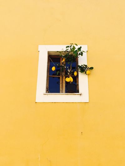 Low angle view of yellow wall amidst window