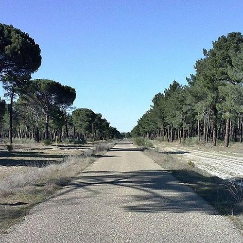 Paseo Pınar Pino Naturaleza natural natura verde paisaje